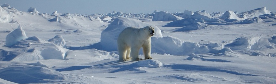 new issues in polar tourism communities environments politics